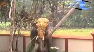 Repeat youtube video kaduthuruthynews   Njeezhoor virappichha kannan enna kobante parakramam