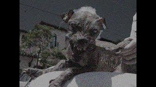 3 Страшных Случая С Собаками