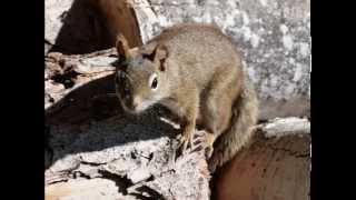 SONIDO DE LA ARDILLA SOUND OF SQUIRREL  - carlosmanfacebookx.blogspot.com - YouTube Videos