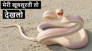 5 Most Beautiful Snakes In The World In Hindi