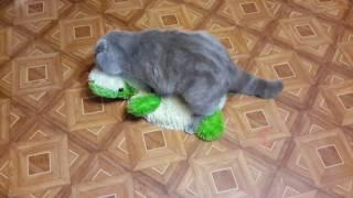 Кот трахун