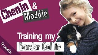Training my Border Collie | 01 | Chenin & Maddie  9 Weeks Old