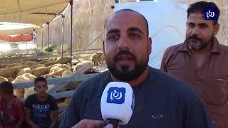 تراجع الحركة الشرائية للأضاحي في محافظة الزرقاء - (19-8-2018)