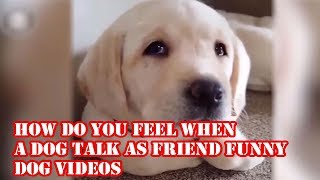 How Do You Feel When A dog Talk As Friend? Funny Dog Videos!