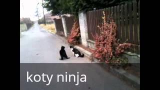 śmieszne :koty ,pies ,małpa ,chomiki ,i człowiek .