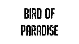 Netsky - Bird of Paradise (Cover Art)