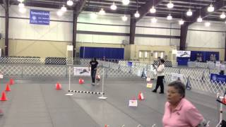 2013 Akc National Rally Competition - Rae Class - Top Mixed Breed