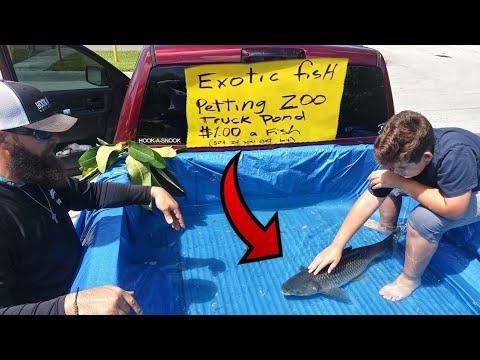 DIY TRUCK FISH POND Aquarium Petting ZOO!!! thumbnail