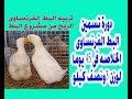 تربية البط دورة تسمين البط الفرنساوى الخلاصه فى 45 يوما لوزن 3ونصف كيلو  French breeding ducks