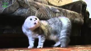 Gatos hablando como presonas