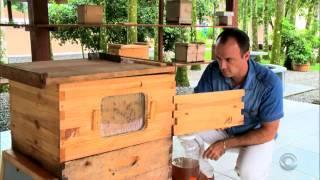 Caixa de abelha Flow Hive