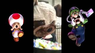 Doggo plugin those Halloween candys