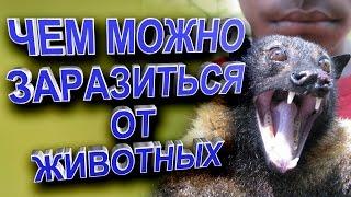 Болезни которыми животные заразили человека