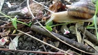 VLOG для любителей природы: Наземные улитки . Краски и звуки весны. Кладбище для животных