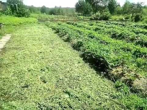 Подготовка почвы под посадку клубники | размножение | плантация | кассетная | земляника | клубники | клубника | удобный | саженцы | розетка | посадка