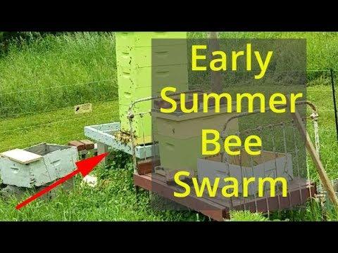 Early Summer Bee Swarm