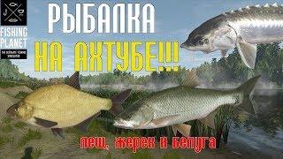 РЫБАЛКА НА АХТУБЕ! Обзор - Fishing Planet