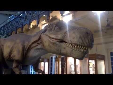 Dinosaur at Chennai Egmore Museum