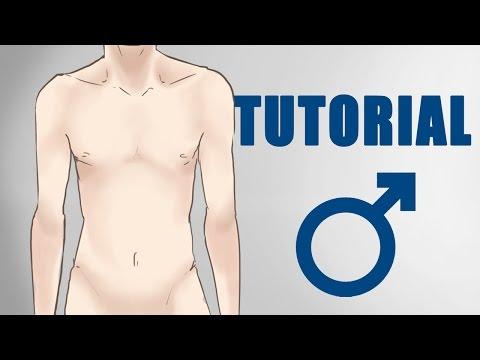 Männer zeichnen – Anatomie für Anfänger