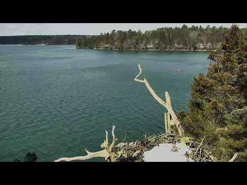 Audubon Osprey Nest Cam 03-17-2018 08:29:32 - 09:29:33