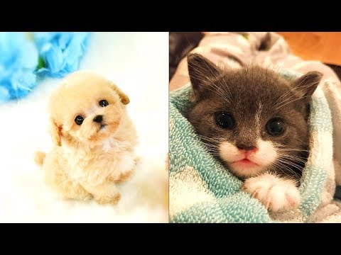 Cute and Funny Pets | Cat and Dog Videos Compilation #1