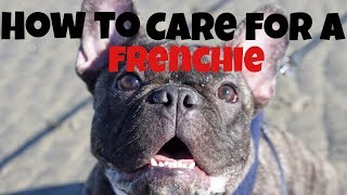 FRENCH BULLDOG PUPPY TIPS!