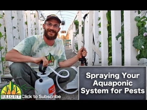 Spraying Your Aquaponic System for Pests
