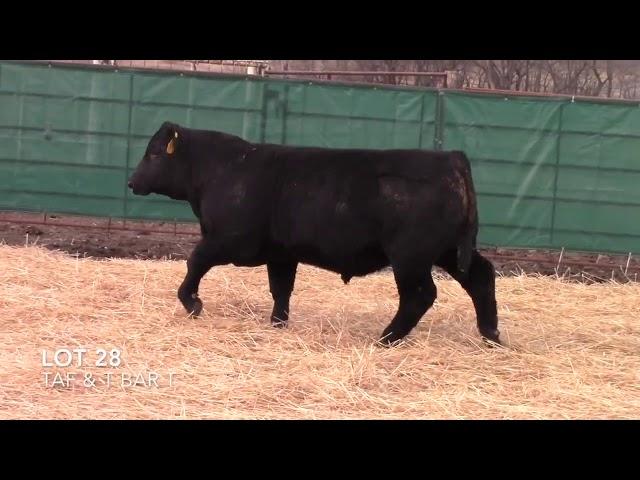 Taliaferro Angus \u0026 T Bar T Angus Ranch - 28
