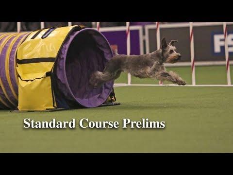 Standard Course Prelims