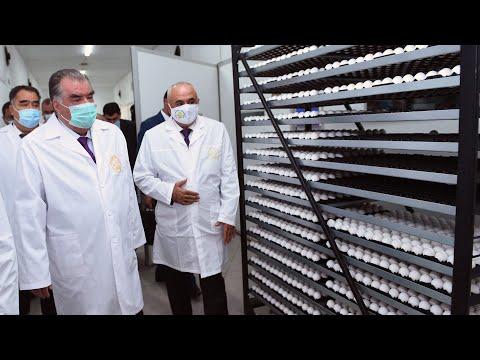 Рахмон открыл птицефабрику в Матчинском районе Таджикистана