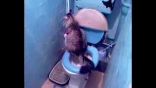 кошка ходит в туалет