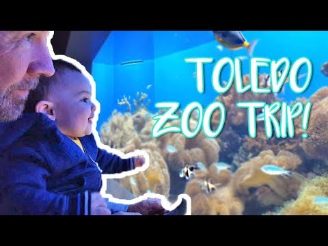 toledo zoo aquarium trip family vlog