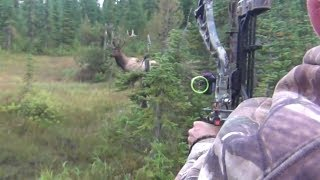 The best archery shots on video, bowhunting - StuckNtheRut