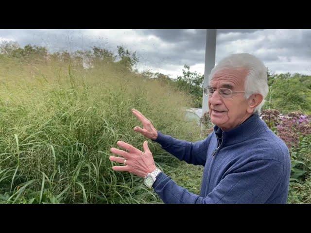 Plant Profile: Switch Grass