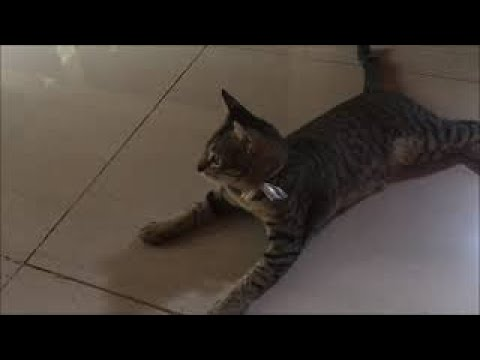 Funny Cats Cute and Baby Cats Videos Compilation