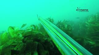 Spearfishing Tarakihi Tips Hawkes Bay NZ