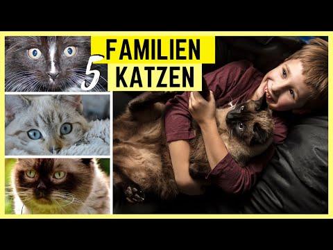 TOP 5 KATZEN FR KINDER | Fantastische Katzenrassen fr Familien mit Kindern