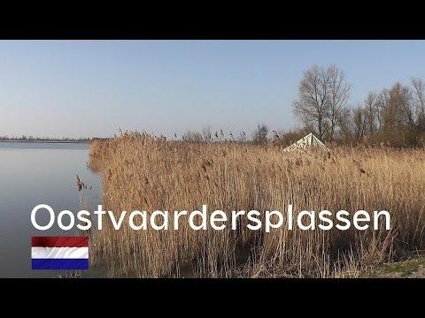 HOLLAND: Oostvaardersplassen, nature reserve [HD]