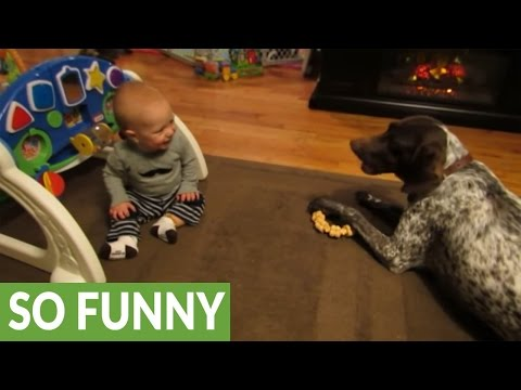 Dog barks on command, sends baby into giggle fit