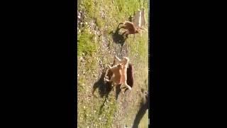 кошки на прогулке