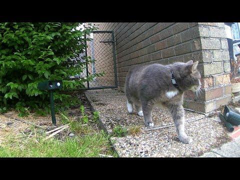 Cats Ignoring Ultrasonic Repellers