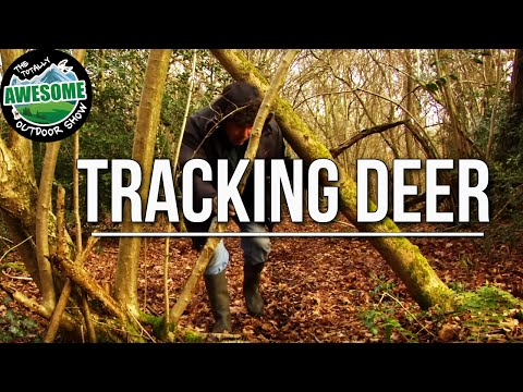 How to Track and Stalk wild Deer | TA Outdoors
