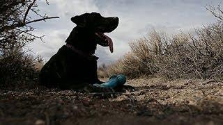 'cadaver Dog' Sniffs Out Human Remains