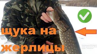 Ловля щуки на жерлицу Зимняя рыбалка на жерлицу Поклевка и вываживание щуки shorts