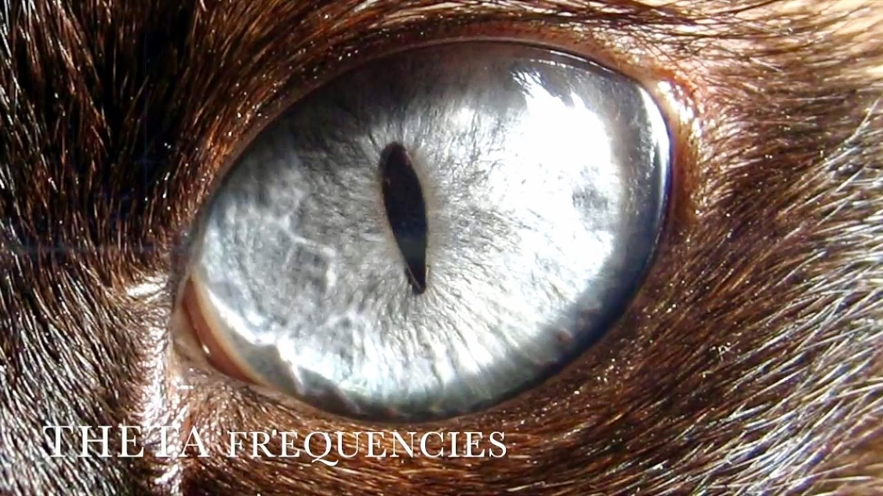 Rare wolf eye colors