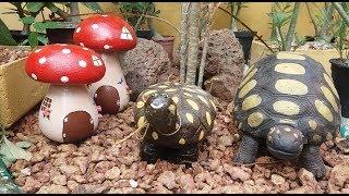 Como fazer tartaruga para decorar jardins (passo a passo)