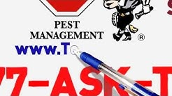 Bed Bugs Control in NORTH MIAMI , FL ( Removal Treatment )