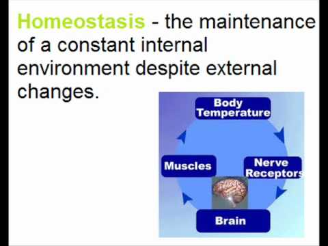 Communication and Homeostasis Basics - A2 Biology Revision - OCR ...