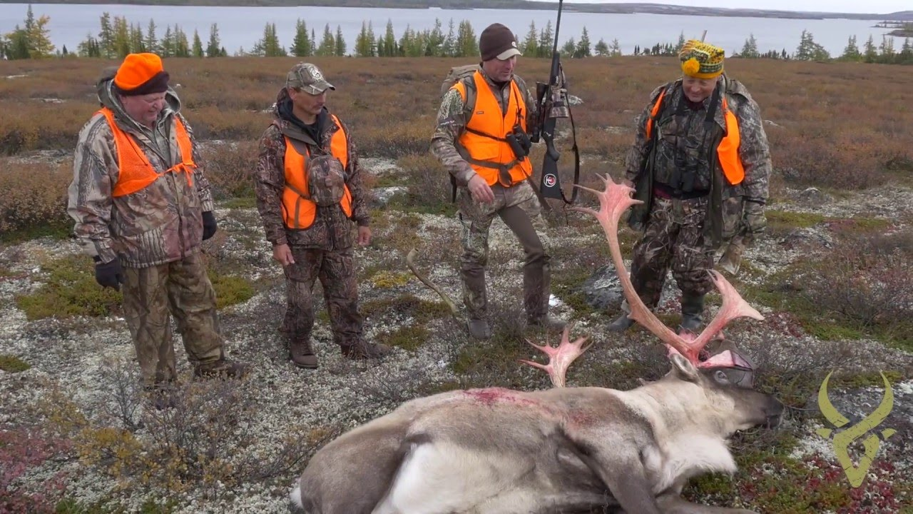 the 3 minute adventure quebec caribou double youtube