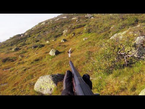Rypejakt I Åseral / Grouse Hunting / Ptarmigan Hunting
